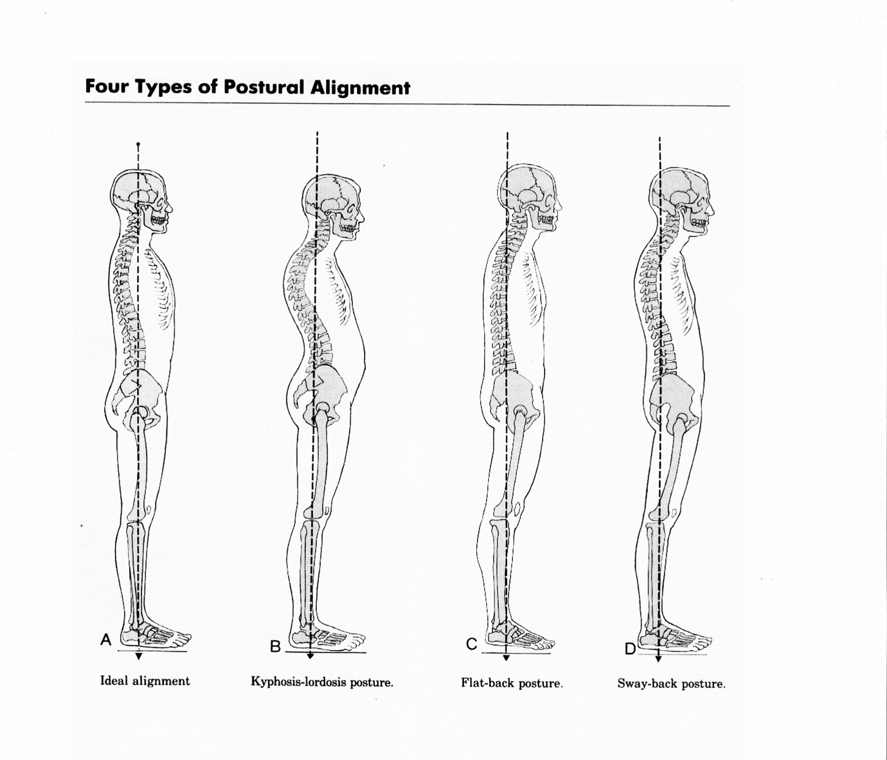 General principles all these postures can do a regular pilates workout